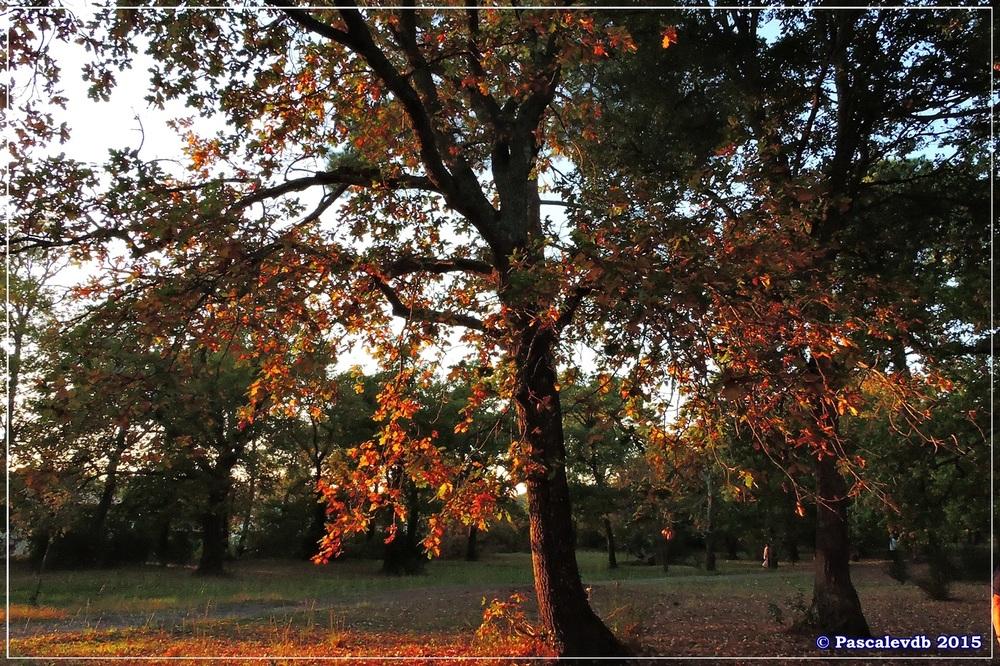 Automne au parc de la Chêneraie à la Hume - Octobre 2015 - 6/7