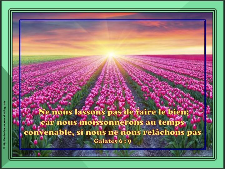 Ne nous lassons pas de faire le bien - Galates 6 : 9