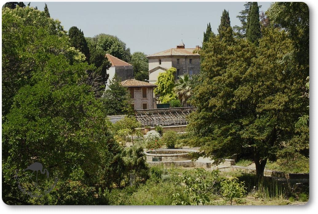 Balade au Jardin botanique de Montpellier...