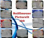 PictureIt 166 - Sniffmouse