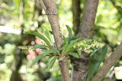Jardin des orchidées à Monteverde