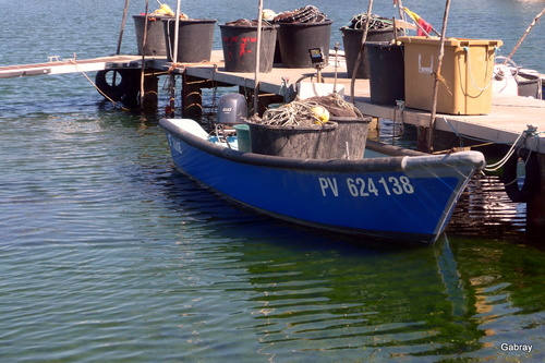 Au bord de l'étang du Barcarès