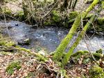 Balades en forêt morvandaise... Mars 2013