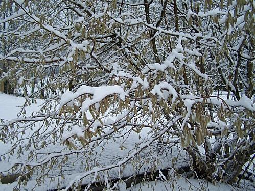 neige du 9 déc 2010 12
