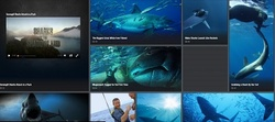 Shark Week brings a new update to Hungry Shark Evolution