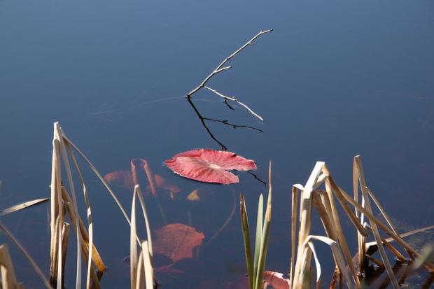 Au bord du chemin... les étangs