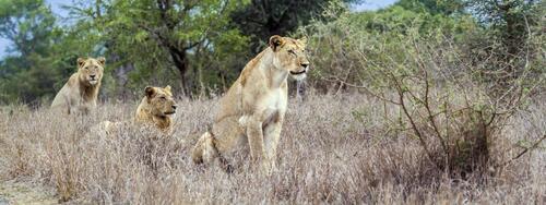 Les rhinocéros, principales victimes du braconnage