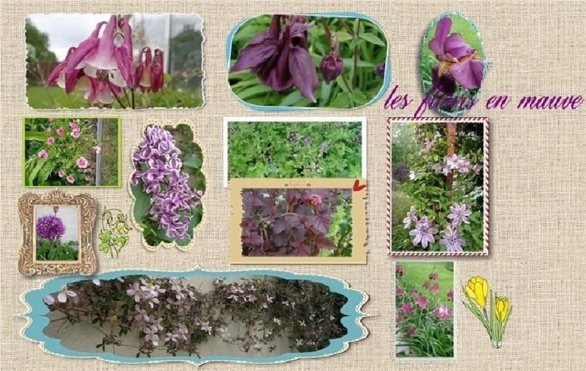les fleurs en mauve