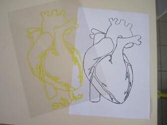 Course du coeur 2014