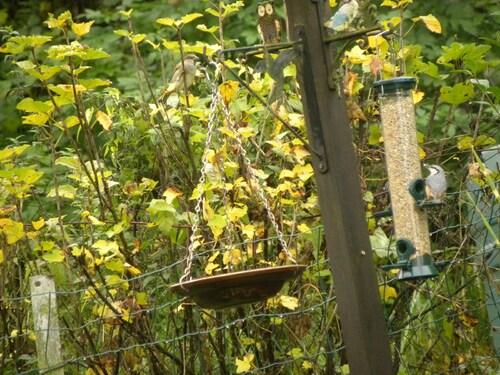 Les graines pour les oiseaux