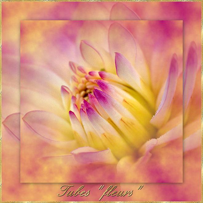 "Tubes ""fleurs"""