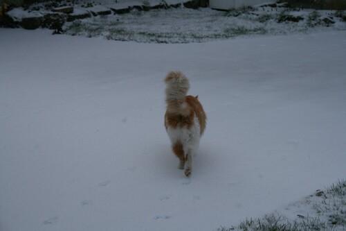 L'hiver n'est pas mort !!