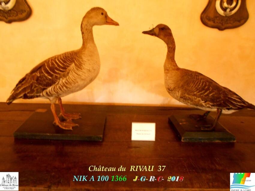 CHÂTEAU & JARDINS DE RIVAU   3/4 - 9/10      D      13/02/2020
