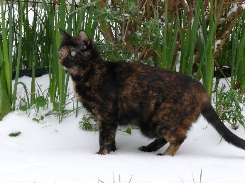 neige-chats_04.JPG