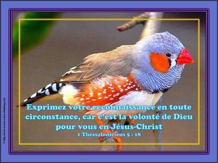Exprimez votre reconnaissance en toute circonstance - 1 Thessaloniciens 5 : 18