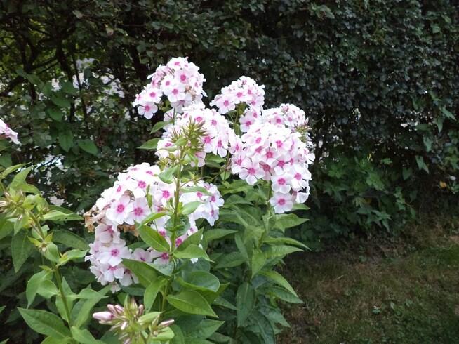 Les fleurs de Marie