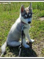 Mayka (2,5 mois)