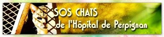Association SOS Chats de l'Hôpital de Perpignan