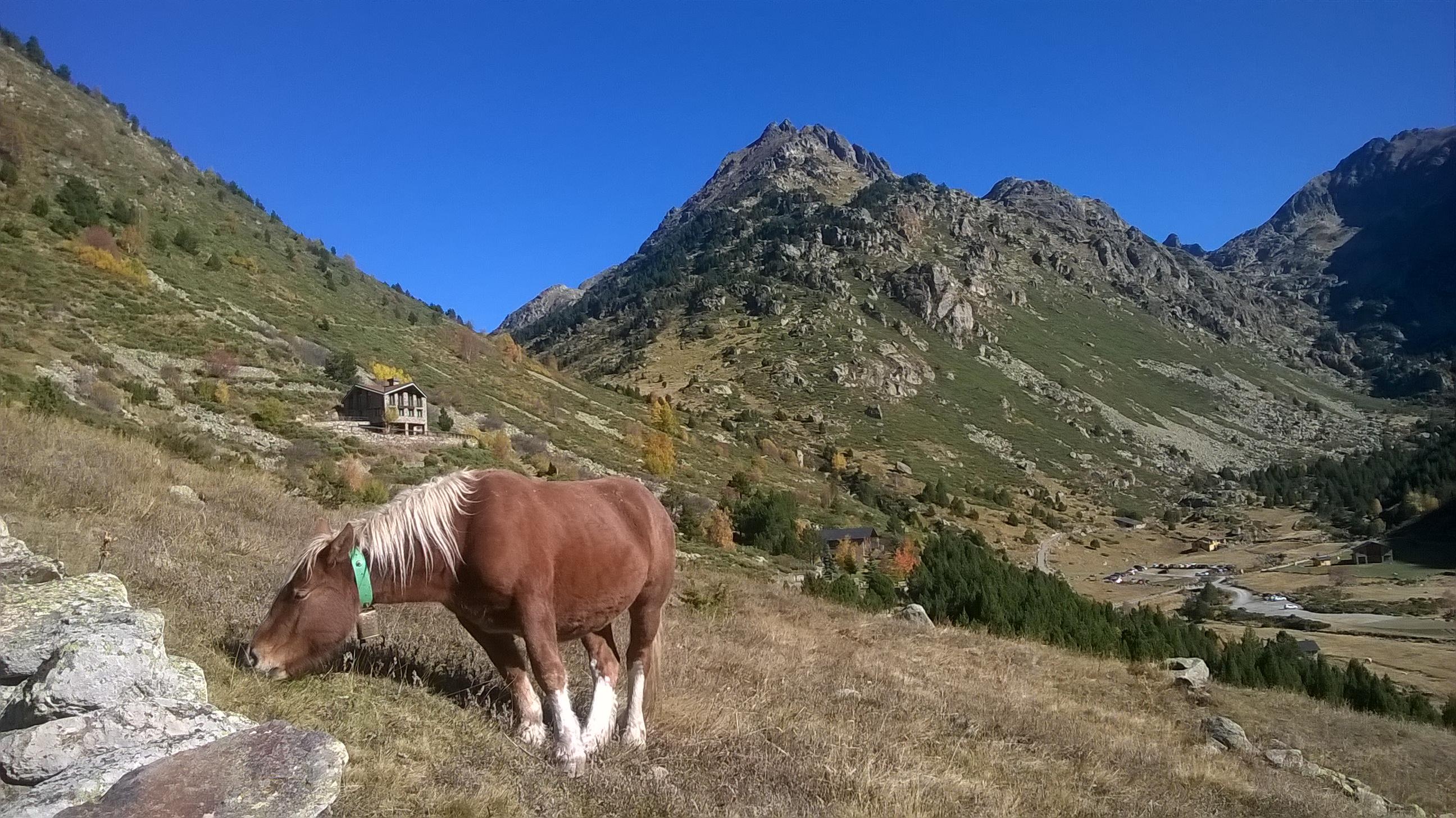 http://ekladata.com/-4EXX8e_2IJSWlCRFoJ4r6D1kGM/Andorre-Canillo-cheval.jpg