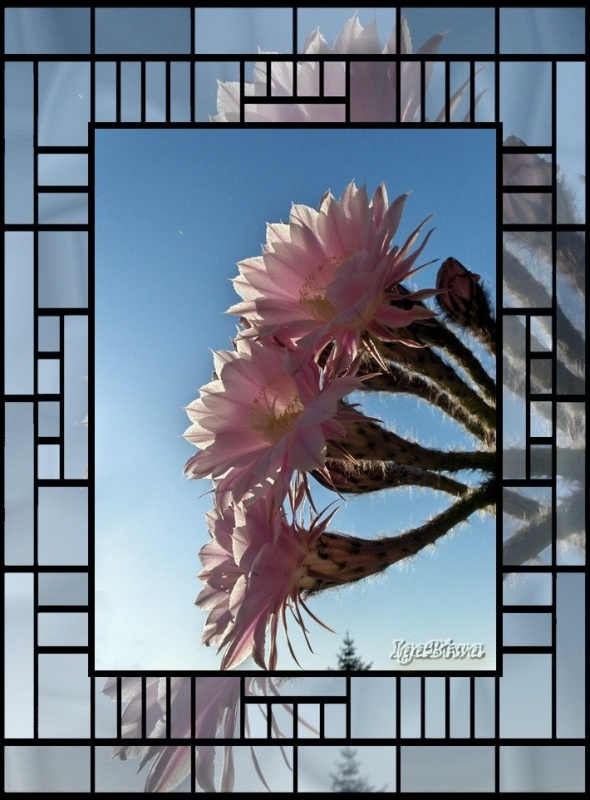 Les Cactus d'Igabiwa