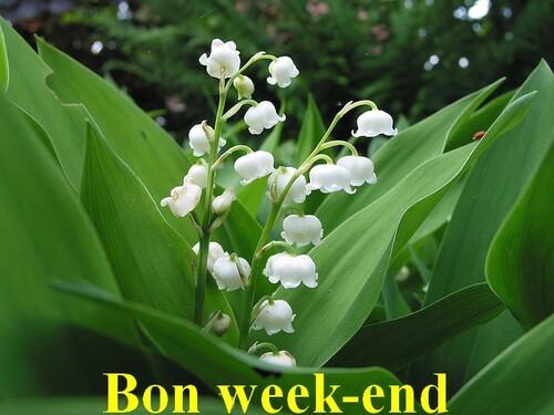 Vendredi 7 Mai/ Bon week-end