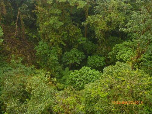 Au-dessus des arbres à SANTA ELENA