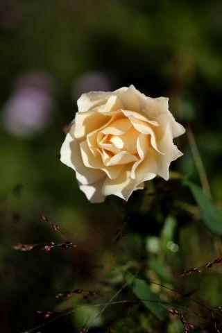 Roseraie - Octobre (3/4)