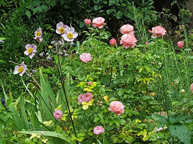 Clos fleuri