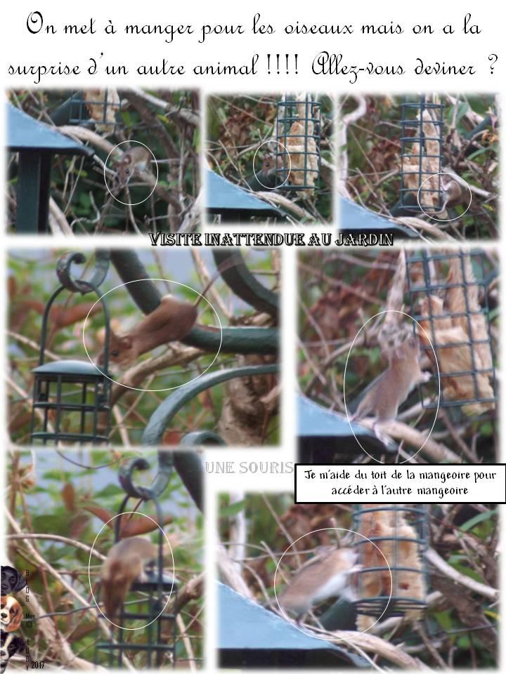 Visite inattendue au  jardin