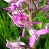 fleur-d-orchidee-visoflora-3722.jpg