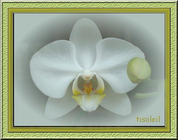 orchideejm.jpg