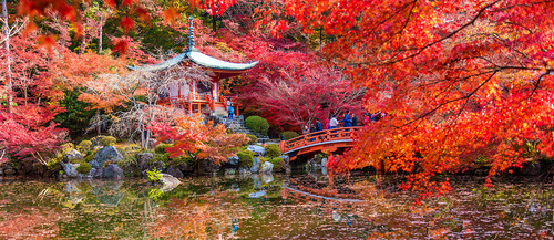 autumn colors momiji leaves in Kyoto Japan