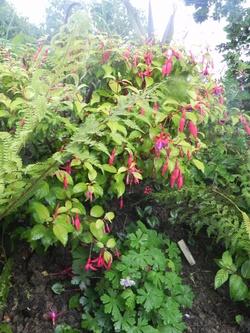 Arbres Arbustes