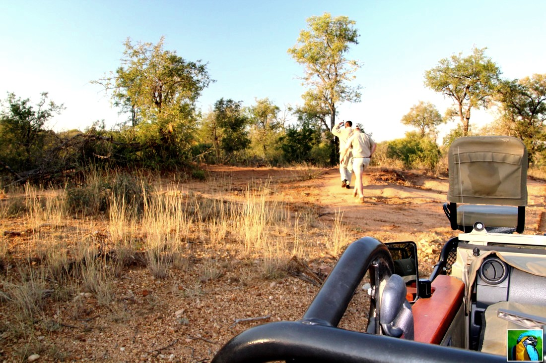 Afrique du Sud : juin 2018 : autre safari du soir