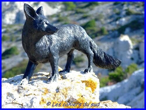 Le renard des calanques...des news