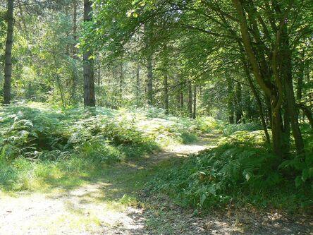 Bastions en forêt de Dreux