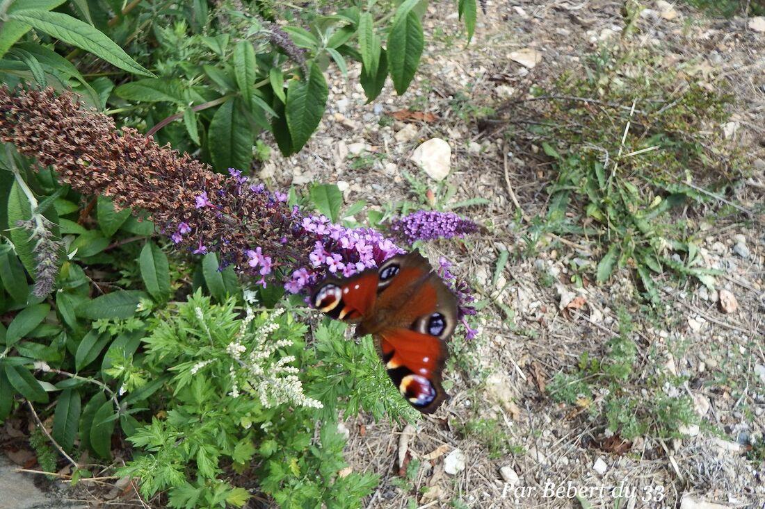 des papillons sur l'arbre à papillons