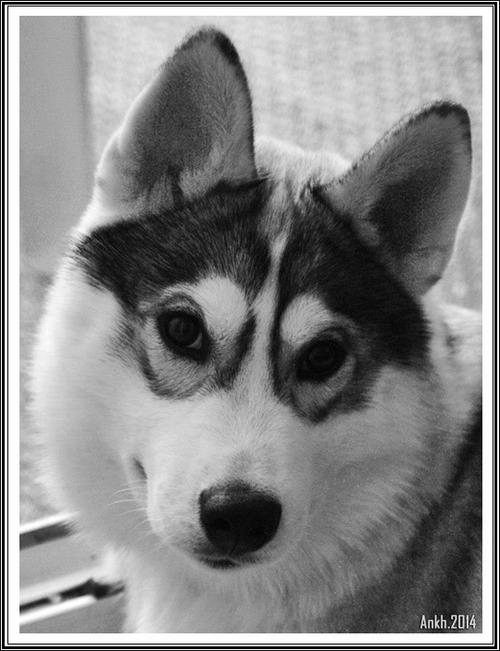 Jockie (5 mois)