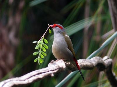 Oh! les charmants oiseaux joyeux