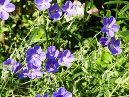 les nouvelles floraisons