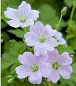 Journées des plantes de printemps à Aiguebelette