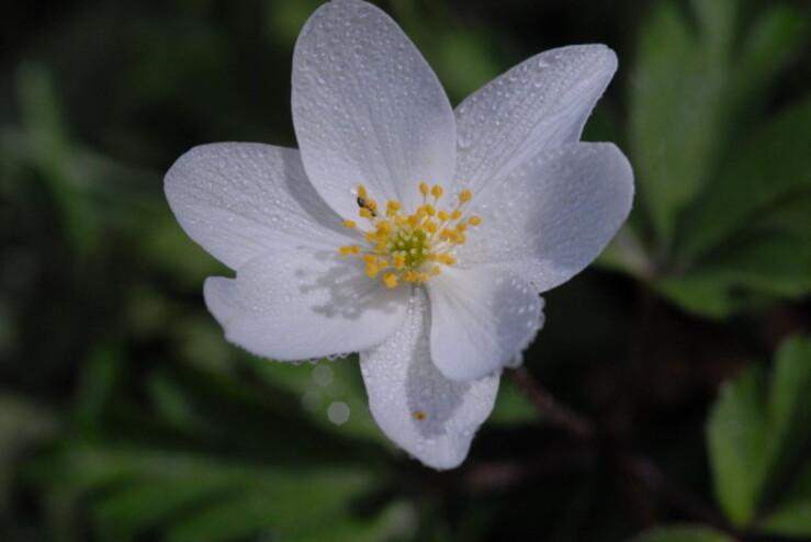 Fleurs-6-0416.jpg