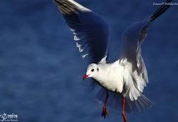 Oiseaux variés 2