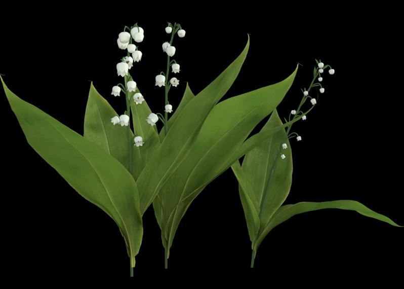 Image de fleurs muguet (render-tube)