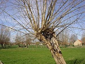 coiffure arbre