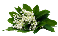 *** Fleurs de mai ***