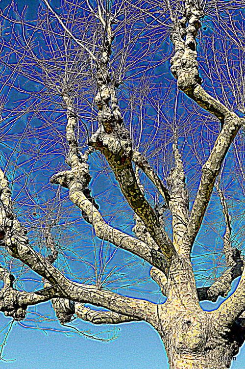 Créatif : couleurs des branches ! (2)