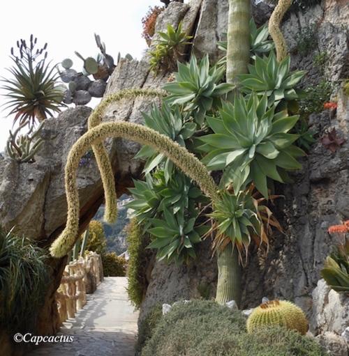 Merveilles du Jardin Exotique de Monaco