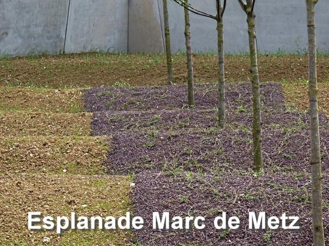 Institutions Marc de Metz 3