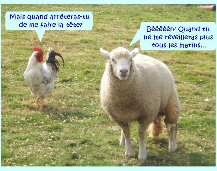 Un moutons, deux moutons….
